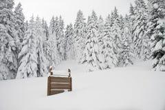 Kennzeichnen Sie innen einen schneebedeckten Wald, umfassenden Überblick Lizenzfreie Stockbilder
