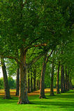 Kensington Garden in London. Stock Image
