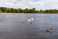 Kensington ogródy, Królewski park, Tęsk woda, Londyn, Zjednoczone Królestwo Zdjęcia Royalty Free