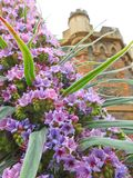 Kent country castle home with tall spiky climbing pride of madeira plant flowers. Photo of a kent country castle manor home with beautiful purple pride of stock images