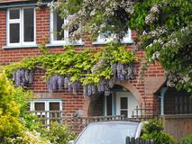 Kent country cottage home with trailing climbing wisteria plant flowers arch porch doorway royalty free stock photos