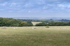 Kent Countryside View fotografia de stock