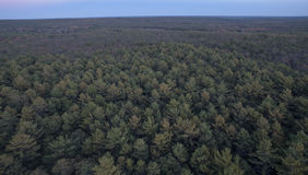 Kent County-Wald Stockfotografie