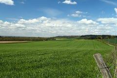 Kent kullar i vår Royaltyfri Foto