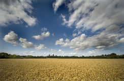 Kent Landscape Royalty Free Stock Photography
