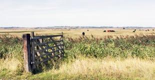 Kent-Landschaftsgroßbritannien-sheppey Stockfotos
