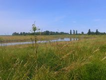 Kent marsh. Summer river field Stock Photography