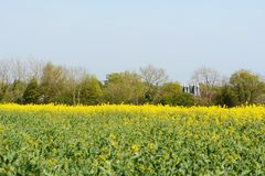 Kent oast houses stand beyond a field of rapeseed stock image