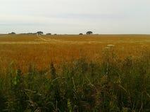 Kent summer. Countryside rural crops in Kent summer Stock Photos