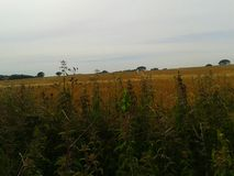 Kent summer. Countryside rural crops in Kent summer Stock Image