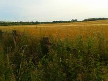 Kent summer. Countryside rural crops in Kent summer Stock Photography