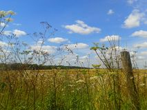 Kent wildflowers. Wildflower border kent field sunny summer Stock Photos