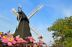 Kent windmill and clematis flowers Royalty Free Stock Photography