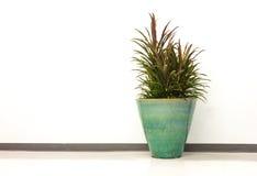Kentia palm pot Stock Photos