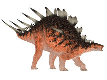 Kentrosaurus Stock Photos