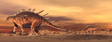 Kentrosaurus dinosaurs mum and baby - 3D render Royalty Free Stock Images
