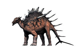 Kentrosaurus stock illustration