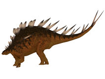 Kentrosaurus Side Profile. The Kentrosaurus dinosaur from the Jurassic Period of North America has plates along its spine and spikes on its shoulders and tail Royalty Free Stock Image
