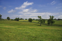 Kentucky Bluegrass. Beautiful horse farm in the countryside of KY Stock Photography