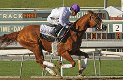 Kentucky Derby Hopeful. Arcadia, CA - Mar 3: Kentucky Derby hopeful I'll Haven Another works out under his regular jockey, Mario Gutierrez, at Santa Anita Race stock photos