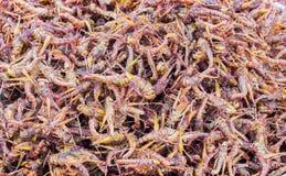 Kentucky hornet boild street food Stock Images