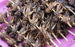 Kentucky hornet boild street food Royalty Free Stock Photos