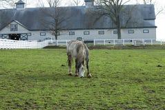 Kentucky Horse Farm Royalty Free Stock Photo