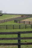 Kentucky Horse Farm Royalty Free Stock Photos
