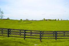 Kentucky Horse Farm. Beautiful Kentucky Horse Farm During Spring royalty free stock photography