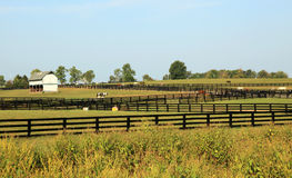 Kentucky Horse Park. In Lexington KY royalty free stock photography