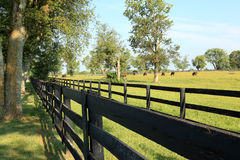Kentucky Horse Ranch. In Lexington KY stock photography