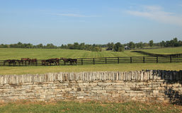 Kentucky Horse Ranch. In Lexington KY royalty free stock photography
