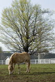 Kentucky-Pferden-Bauernhof stockfoto