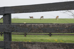 Kentucky-Pferden-Bauernhof Lizenzfreie Stockfotos