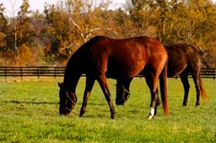 Kentucky-Pferdenbauernhof Lizenzfreie Stockfotos
