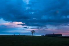 Kentucky-Sonnenuntergang-Schattenbild-Pferde und Scheune Stockfotos