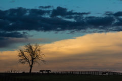 Kentucky Sunset Silhouette. Horses making there way to the barn while a storm rolls in in Kentucky Stock Images