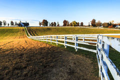 Kentucky Thoroughbred Horse Farm. This image of a thoroughbred horse farm was captured near Lexington, Kentucky in early autumn. The photograph was taken just royalty free stock photos