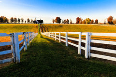 Kentucky Thoroughbred Horse Farm. This image of a Kentucky thoroughbred horse farm was taken in the autumn at dawn. The location was near Lexington, Kentucky stock images