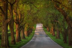 Winding road in beautiful KY spring among the horse farms Royalty Free Stock Image
