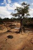 Kenya Arkivfoton