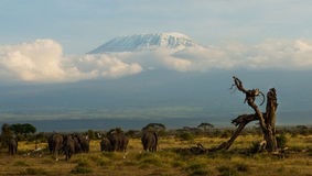 kenya fotografia stock libera da diritti