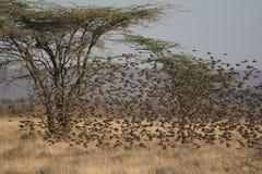 Kenya: Bird-Lovers Paradies at Ngoro River in Samburu Nationalpark stock image