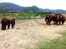 kenya för amboselielefantfamilj nationalpark Arkivfoto