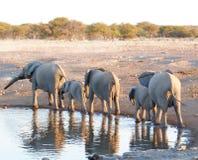 kenya för amboselielefantfamilj nationalpark arkivbilder