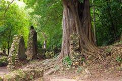 Free Kenya, Gede Ruins Laid In The Vicinity Of The Malindi Resort Royalty Free Stock Image - 88092646