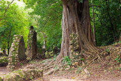 Kenya, Gede ruins laid in the vicinity of the Malindi resort Royalty Free Stock Image