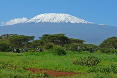 kenya kilimanjaro Arkivbilder