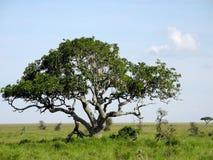 kenya krajobraz Zdjęcia Royalty Free