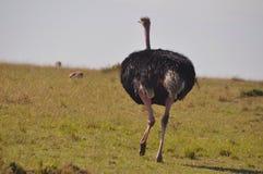 Kenya land Royalty Free Stock Images